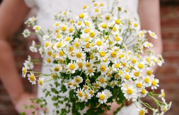 Baby's Breath Wedding Bouquet (18)